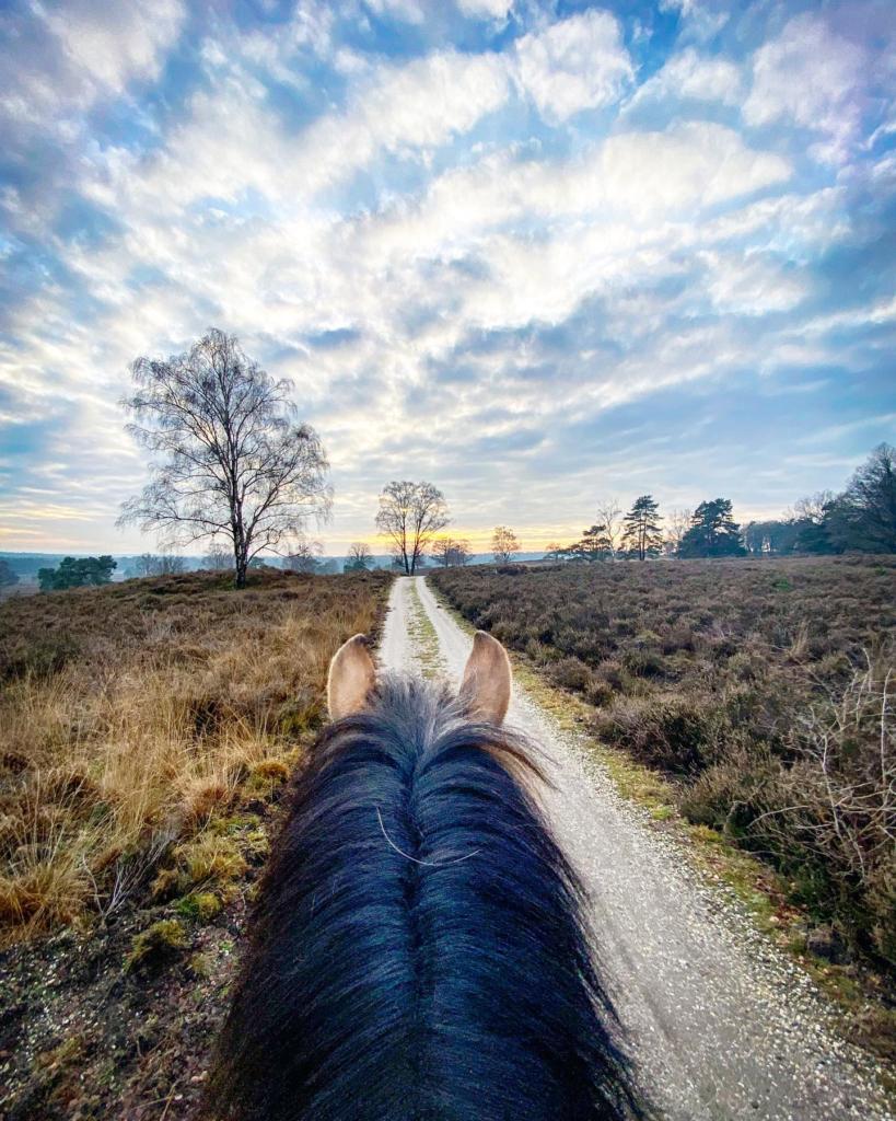 Uitzicht vanaf paard
