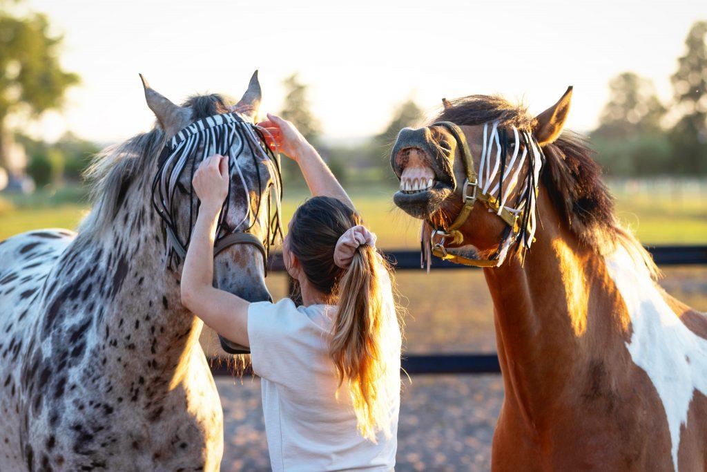 Leuke paarden foto