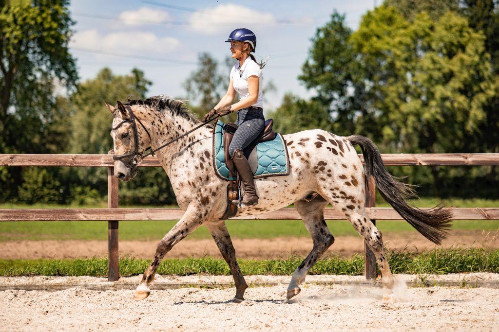 Draf moment fotograferen paard