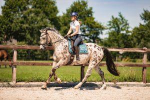 Galop moment fotograferen paard