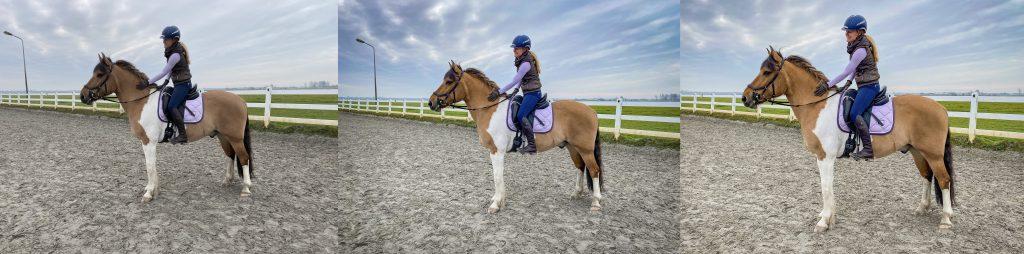 Bewerking paardenfoto