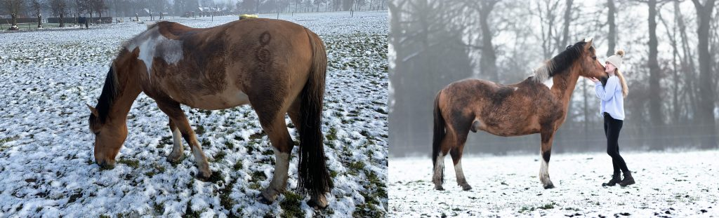 Perspectief paardenfotografie